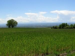 Pyrénées depuis la Montagne Noire